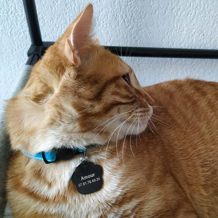 Amour et sa médaille en forme d'empreinte de patte de chat
