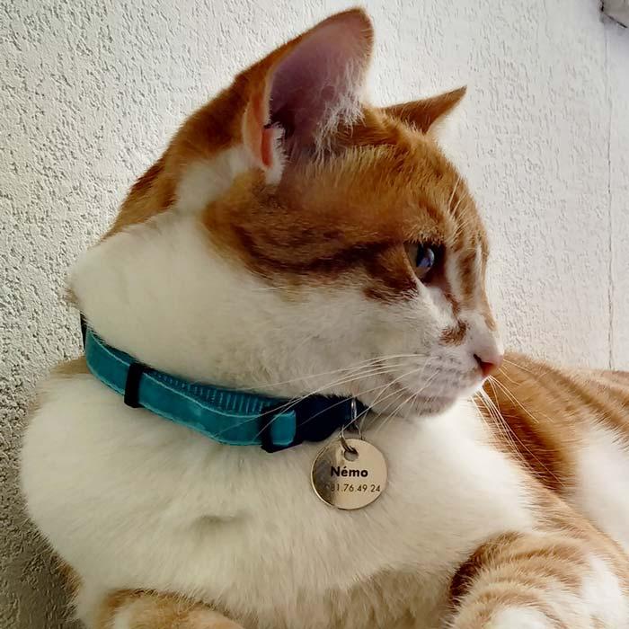 Némo le chat et sa médaille ronde en laiton nickelé
