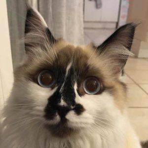Portrait de notre chat Onyx