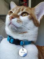 Médaille chat ronde gravée nom et téléphone