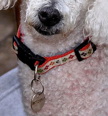 Médaille chien avec coordonnées tél