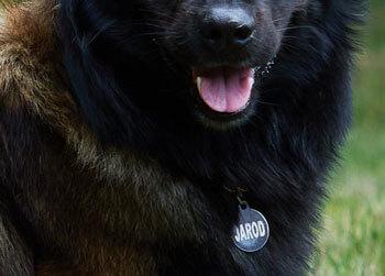 Médaille chien ronde couleur noire avec nom du chien en blanc